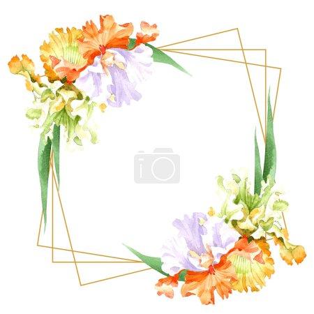 Iris blanc orangé fleur botanique florale. Feuille sauvage de printemps fleur sauvage isolée. Ensemble d'illustration de fond aquarelle. Aquarelle dessin mode aquarelle isolé. Cadre bordure ornement carré .