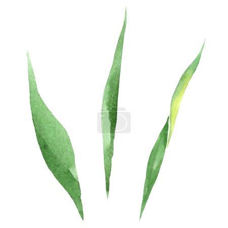 Photo pour Fleur Iris vert feuille floral botanique. Wildflower de feuille de printemps sauvage isolé. Aquarelle de fond illustration ensemble. Dessin aquarelle de mode aquarelle. Élément d'illustration isolé feuille. - image libre de droit