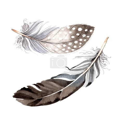Photo pour Aquarelle bleu et noir plume d'oiseau de l'aile isolée. Plume Aquarelle pour fond. Mode dessin aquarelle. Élément d'illustration de plumes isolées . - image libre de droit