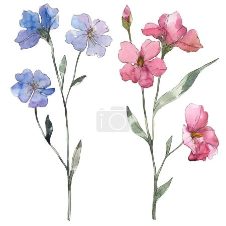 Pink and purple flax floral botanical flower. Wild spring leaf wildflower isolated. Watercolor background illustration set. Watercolour drawing fashion aquarelle. Isolated flax illustration element.