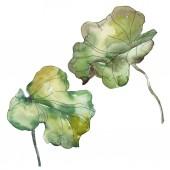"""Постер, картина, фотообои """"Foral ботанические цветок лотоса. Дикие весны листьев Уайлдфлауэр изолированы. Акварель фон иллюстрации набора. Рисования акварелью моды акварель. Изолированные lotus иллюстрации элемент."""""""