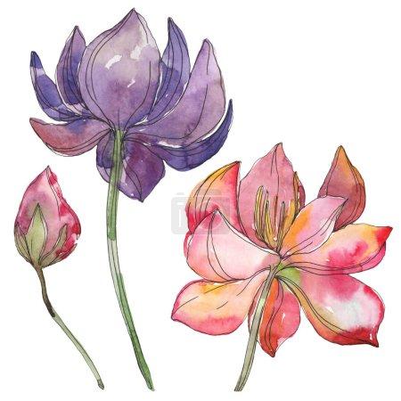 Photo pour Fleur de botanique foral de lotus rose et violet. Wildflower de feuille de printemps sauvage isolé. Aquarelle de fond illustration ensemble. Dessin aquarelle de mode aquarelle. Élément d'illustration isolé lotus. - image libre de droit