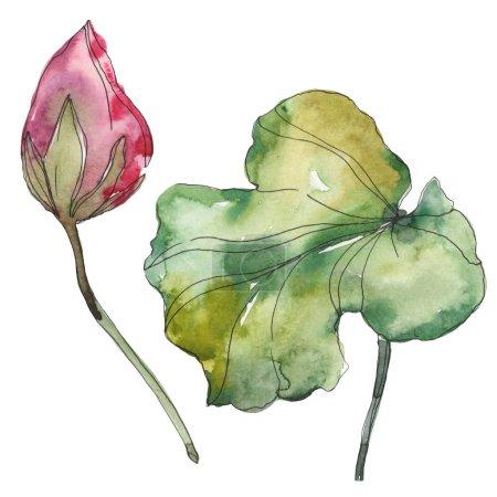 Photo pour Fleur botanique foral de lotus rose. Wildflower de feuille de printemps sauvage isolé. Aquarelle de fond illustration ensemble. Dessin aquarelle de mode aquarelle. Élément d'illustration isolé lotus. - image libre de droit