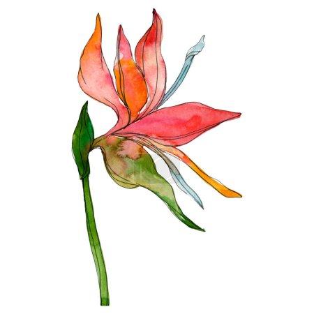 Photo pour Fleurs tropicales de botaniques florales. Feuilles des plantes exotiques isolé. Aquarelle de fond illustration ensemble. Aquarelle de mode dessin aquarelle isolé. Élément d'illustration isolé des feuilles. - image libre de droit