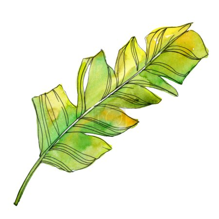 Photo for Tropical floral botanical flowers. Exotic plant leaf isolated. Watercolor background illustration set. Watercolour drawing fashion aquarelle isolated. Isolated leaves illustration element. - Royalty Free Image