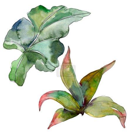 Photo pour Feuillage floral du jardin botanique plante feuille verte. Été hawaïenne tropicale exotique. Aquarelle de fond illustration ensemble. Dessin aquarelle de mode aquarelle. Élément d'illustration isolé feuille. - image libre de droit