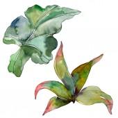 """Постер, картина, фотообои """"Зеленые листья растений Ботанический сад цветочный листвы. Экзотические тропические Гавайские лето. Акварель фон иллюстрации набора. Рисования акварелью моды акварель. Изолированные лист иллюстрации элемент."""""""