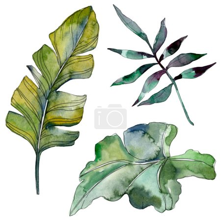 Photo for Green leaf plant botanical garden floral foliage. Exotic tropical hawaiian summer. Watercolor background illustration set. Watercolour drawing fashion aquarelle. Isolated leaf illustration element. - Royalty Free Image