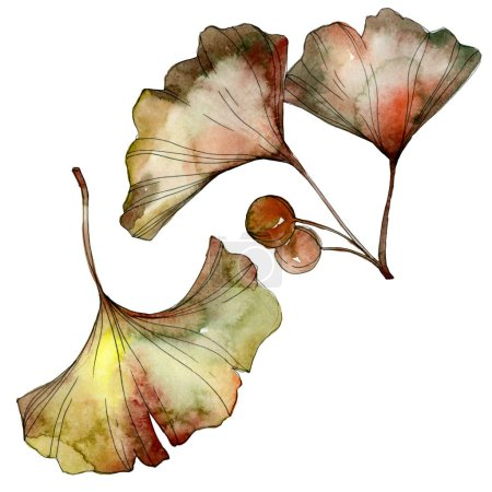 Green and yellow ginkgo biloba leaves isolated on white. Watercolor background illustration set.