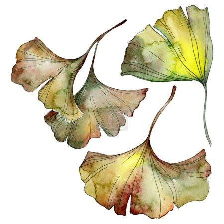 Photo pour Feuilles de ginkgo biloba vert et jaune isolées sur blanc. Ensemble d'illustration de fond aquarelle . - image libre de droit