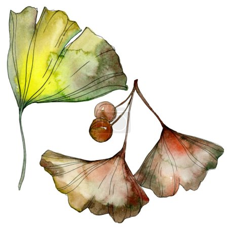 Photo pour Green and yellow ginkgo biloba leaves isolated on white. Watercolor background illustration set. - image libre de droit