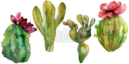 Photo for Green cactus floral botanical flower. Wild spring leaf wildflower isolated. Watercolor background illustration set. Watercolour drawing fashion aquarelle. Isolated cacti illustration element. - Royalty Free Image