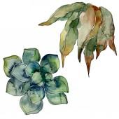 """Постер, картина, фотообои """"Экзотические тропические Гавайские ботанические суккулентов. Акварель фон иллюстрации набора. Изолированные суккуленты иллюстрации элементы."""""""