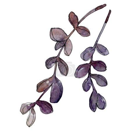 Foto de Exótica tropical hawaiano botánicas suculentas. Conjunto de ilustración de fondo de acuarela. Ilustración de suculentas aislados elementos. - Imagen libre de derechos