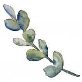 """Постер, картина, фотообои """"Сочные цветочные ботанические цветок. Дикие весны листьев Уайлдфлауэр изолированы. Акварель фон иллюстрации набора. Рисования акварелью моды акварель. Изолированные сочные иллюстрации элемент."""""""