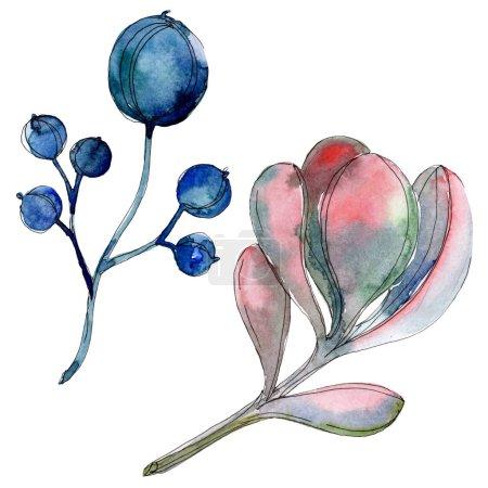 Succulent botanical plants. Watercolor background illustration set. Isolated succulents illustration elements.