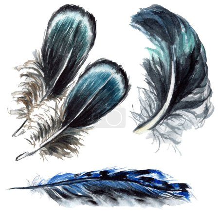 Blue and black bird feathers from wing isolated. Watercolor background illustration set. Isolated feathers illustration elements.
