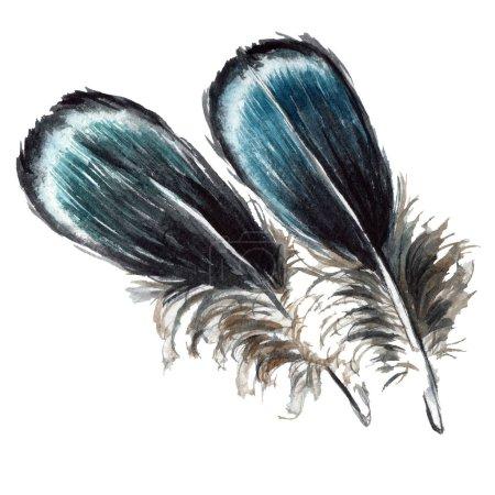 Photo pour Plumes d'oiseaux bleues et noires des ailes isolées. Ensemble d'illustration de fond aquarelle. Plumes isolées éléments d'illustration . - image libre de droit