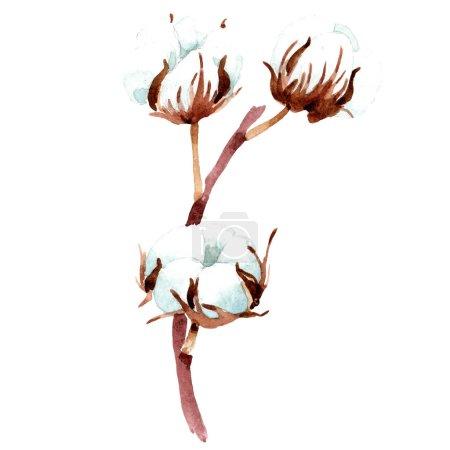 Photo pour Fleur botanique en coton. Illustration de fond aquarelle. Elément d'illustration en coton isolé . - image libre de droit