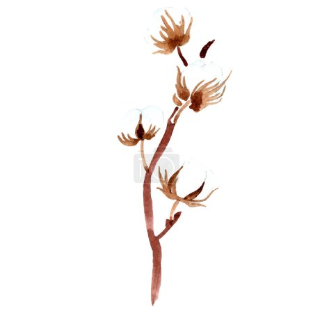 Photo for Cotton botanical flower. Watercolor background illustration. Isolated cotton illustration element. - Royalty Free Image