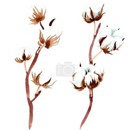 Photo for Cotton botanical flower. Watercolor background illustration. Isolated cotton illustration elements. - Royalty Free Image