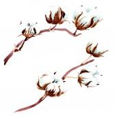"""Постер, картина, фотообои """"Ботанический цветок хлопка. Акварель фон иллюстрации. Изолированные хлопка иллюстрации элементы."""""""