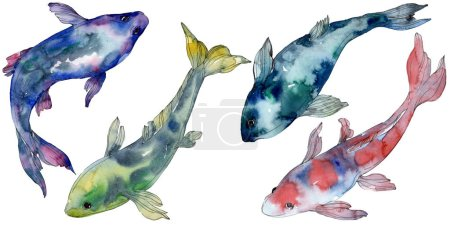 Photo for Spotted aquatic underwater colorful tropical fish set. Red sea and exotic fishes inside. Watercolor background set. Watercolour drawing fashion aquarelle. Isolated fish illustration element. - Royalty Free Image