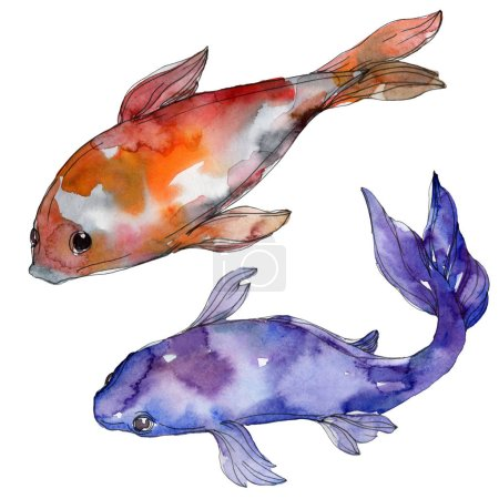 Photo for Aquatic underwater colorful tropical fish set. Red sea and exotic fishes inside: Goldfish. Watercolor background set. Watercolour drawing fashion aquarelle. Isolated goldfish illustration element. - Royalty Free Image