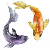 """Постер, картина, фотообои """"Набор водной подводный красочные тропические рыбы. Красное море и экзотических рыб внутри: Золотая рыбка. Набор акварели фон. Рисования акварелью моды акварель. Изолированные рыбка иллюстрации элемент"""""""