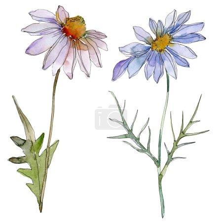 Photo pour Camomille et marguerites avec feuilles vertes aquarelle illustration isolé sur blanc - image libre de droit
