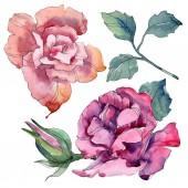 """Постер, картина, фотообои """"Розовый и фиолетовый розовые цветочные ботанического цветы. Дикие весны листьев Уайлдфлауэр изолированы. Акварель фон иллюстрации набора. Рисования акварелью моды акварель. Элемент изолированных иллюстрация розы."""""""