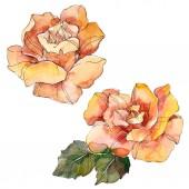 """Постер, картина, фотообои """"Оранжевый цветочные ботанические Роза. Дикие весны листьев Уайлдфлауэр изолированы. Акварель фон иллюстрации набора. Рисования акварелью моды акварель. Элемент изолированных иллюстрация розы"""""""