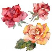 """Постер, картина, фотообои """"Оранжевые и красные цветочные ботанические Роза. Дикие весны листьев Уайлдфлауэр изолированы. Акварель фон иллюстрации набора. Рисования акварелью моды акварель. Элемент изолированных иллюстрация розы"""""""