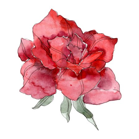 Photo pour Fleur botanique florale Rose Rouge. Feuille sauvage de printemps fleur sauvage isolée. Ensemble d'illustration de fond aquarelle. Aquarelle dessin mode aquarelle. Elément d'illustration isolé rose . - image libre de droit
