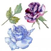 """Постер, картина, фотообои """"Синий и фиолетовый цветочные ботанические цветок розы. Дикие весны листьев Уайлдфлауэр изолированы. Акварель фон иллюстрации набора. Рисования акварелью моды акварель. Элемент изолированных иллюстрация розы"""""""