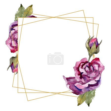 Photo pour Fleurs botaniques florales roses violettes. Feuille sauvage de printemps fleur sauvage isolée. Ensemble d'illustration de fond aquarelle. Aquarelle dessin mode aquarelle. Cadre bordure ornement carré . - image libre de droit