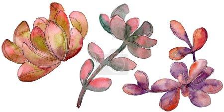 Photo pour Jungle fleur botanique florale succulente. Feuille sauvage de printemps fleur sauvage isolée. Ensemble de fond aquarelle. Aquarelle dessin mode aquarelle. Elément d'illustration succulent isolé . - image libre de droit