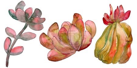 Photo for Jungle succulent floral botanical flower. Wild spring leaf wildflower isolated. Watercolor background set. Watercolour drawing fashion aquarelle. Isolated succulent illustration element. - Royalty Free Image