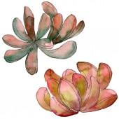"""Постер, картина, фотообои """"Джунгли сочные цветочные ботанические цветок. Дикие весны листьев Уайлдфлауэр изолированы. Набор акварели фон. Рисования акварелью моды акварель. Изолированные сочные иллюстрации элемент."""""""