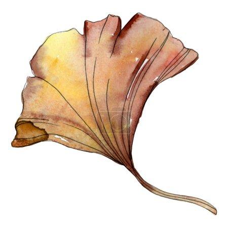 Photo pour Feuille de biloba de ginkgo jaune isolé sur blanc. Élément d'illustration aquarelle. - image libre de droit