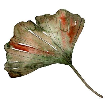 Photo pour Feuille de ginkgo biloba verte isolée sur blanc. Elément illustration aquarelle . - image libre de droit