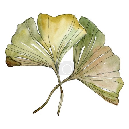 Green red ginkgo biloba leaves. Watercolor background illustration set. Isolated gingko illustration element.