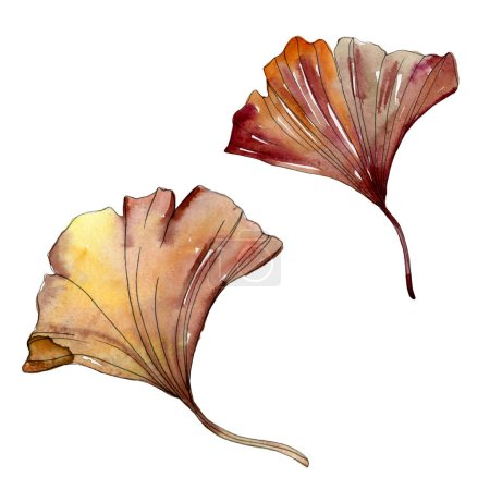Photo for Green and red ginkgo biloba leaves isolated on white. Watercolor illustration set. - Royalty Free Image