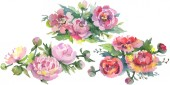 """Постер, картина, фотообои """"Bouquets of peonies with green leaves isolated on white. Watercolor background illustration set. """""""