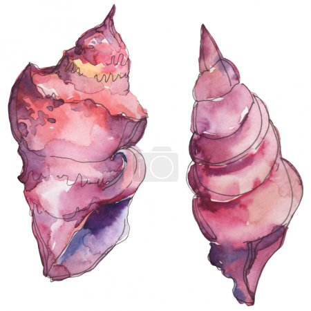 Photo pour Purple marine tropical seashell isolated on white. Watercolor background illustration set. - image libre de droit