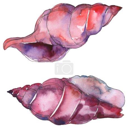 Foto de Purple marine tropical seashell isolated on white. Watercolor background illustration set. - Imagen libre de derechos