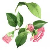 "Постер, картина, фотообои ""Pink camelia floral botanical flowers. Watercolor background illustration set. Isolated camelia illustration element."""