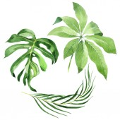 "Постер, картина, фотообои ""Exotic tropical hawaiian green palm leaves isolated on white. Watercolor background set. """