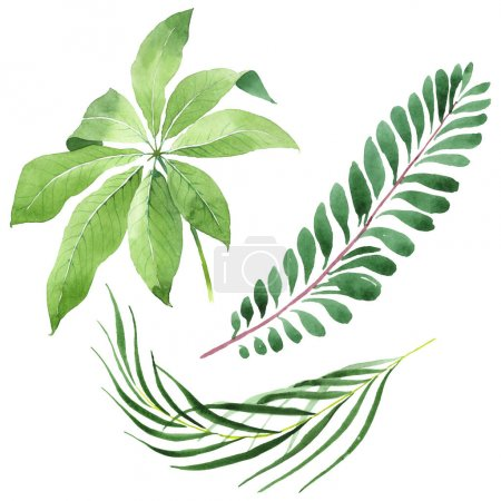 Photo for Exotic tropical hawaiian green palm leaves isolated on white. Watercolor background set. - Royalty Free Image