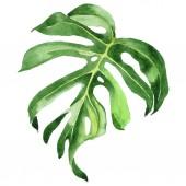 "Постер, картина, фотообои ""Exotic tropical hawaiian green palm leaves isolated on white. Watercolor background set. """